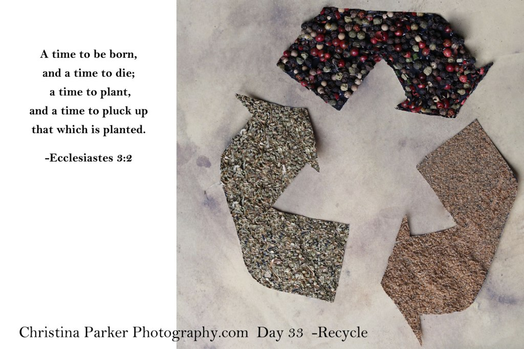 recycle-day-33-Christina-Parker-Photography